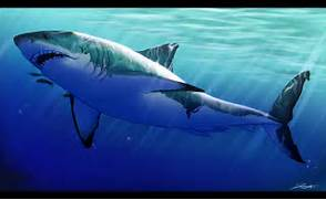 great white shark by djcoulz watch digital art drawings paintings  Great White Shark Painting