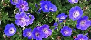Arbuste Plein Soleil Longue Floraison : les plus belles vivaces a longue floraison inspirations ~ Premium-room.com Idées de Décoration