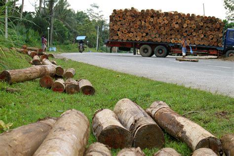 philippines timber hauling   living pulitzer center