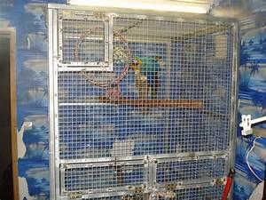 Cage A Perroquet : cage de soin faite maison pour grand perroquets ~ Teatrodelosmanantiales.com Idées de Décoration