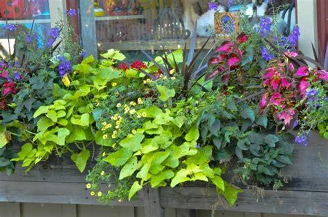 balconniere en bois pour les jolies fleurs