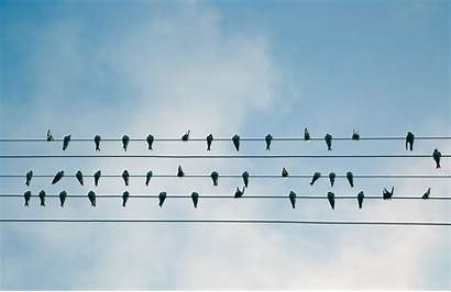 Birds Wire Electric Line Bird 4k Desktop