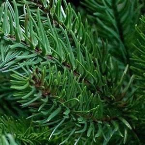 Weihnachtsbaum Kuenstlich Wie Echt : k nstlicher weihnachtsbaum wie echt preisvergleich my blog ~ Michelbontemps.com Haus und Dekorationen