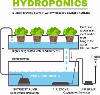 Hydroponic Hydroponics Culture Hydroponique Sol Infographic Hors