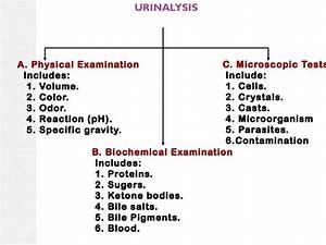 Urine Interpretation    Test    Analysis