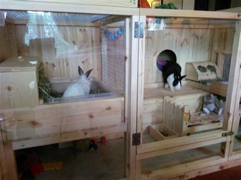 pin  bunnies
