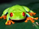 Image result for frog