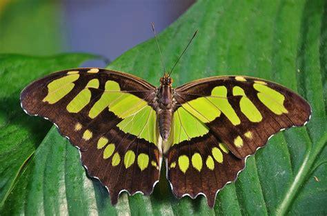 Butterfly Dolls · Free Photo On Pixabay
