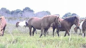 Wild Horses Breeding Season - Best Horse 2017