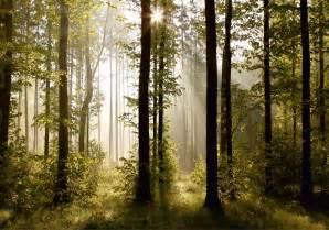 jugendzimmer wald fototapete tapete natur wald bäume lichtspiel foto 360 cm x 254 cm