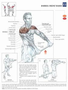 38 Best Images About Best Exercises For Love Handles On