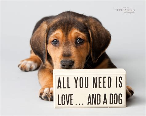 teresa berg dog photography focus  rescue