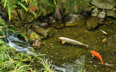 Let's Examine Types Of Pond Fish  House Exterior And Interior