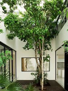 17 Best Images About Internal Courtyard On Pinterest