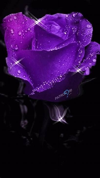 Purple Rose Trippy Gifs Flower Lovethispic Google