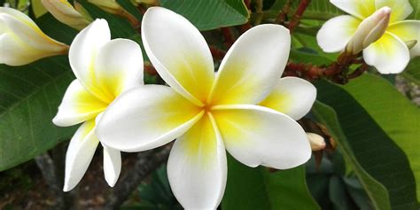 Exotic Flowers | Living Color Garden Center