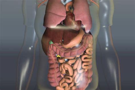 diabetes animation    body  learn