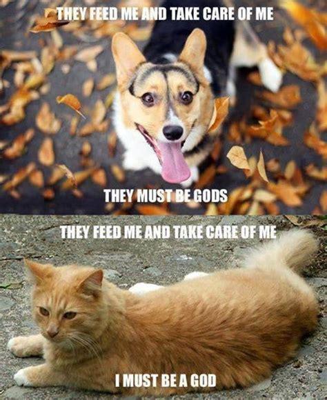 Dog And Cat Memes - dog religion cat religion