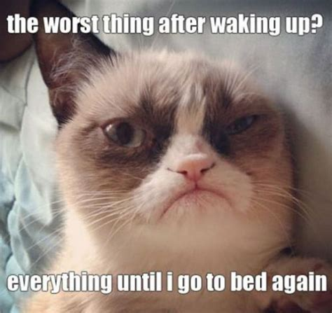 Go To Bed Meme - 35 most funniest grumpy cat memes on the internet