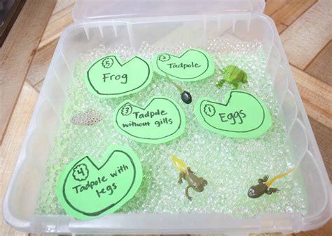 life cycle   frog  kids sensory bin  water bead