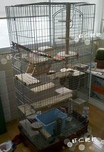 Cages & Ideas | Sammi's Chinchillas & Pet Supplies