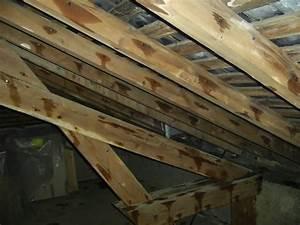 Traitement Bois Charpente : traitement charpente bois pulverisation ~ Edinachiropracticcenter.com Idées de Décoration