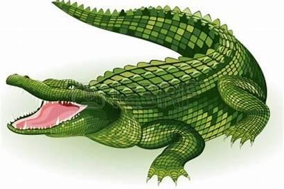 Vector Crocodile Clipart Illustration Background Alligator Saltwater