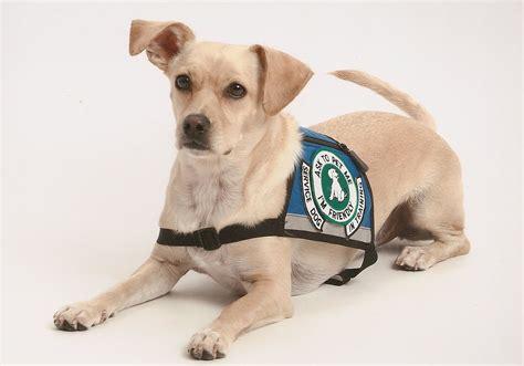 psykiatrisk servicehund wikipedia