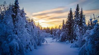 Forest Winter Sunrise Snow Landscape Trees Desktop