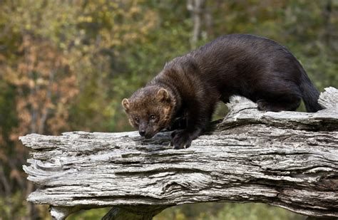 Jaw-dropping Facts About Fishers