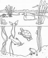 Pond Animal Worksheet sketch template