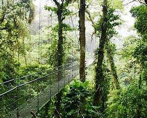 Costa Rica Rainforest - Rain Forest Tours in Costa Rica