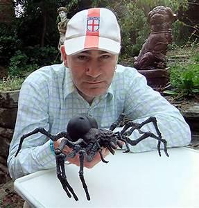 Cryptomundo » Giant Spiders – Monstrous Myth or Terrifying ...