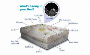 mattress cleaners in cape town call 021 300 1875 With clean bed bugs from mattress