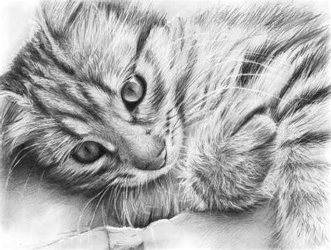 Realistic Cat Pencil Sketch - Google Search