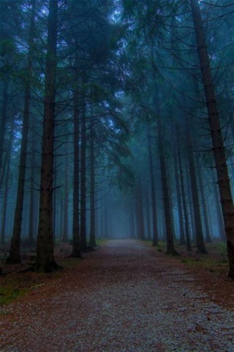 dark woods hd wallpapers