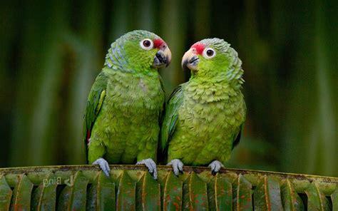 animals, Birds, Parrot Wallpapers HD / Desktop and Mobile ...