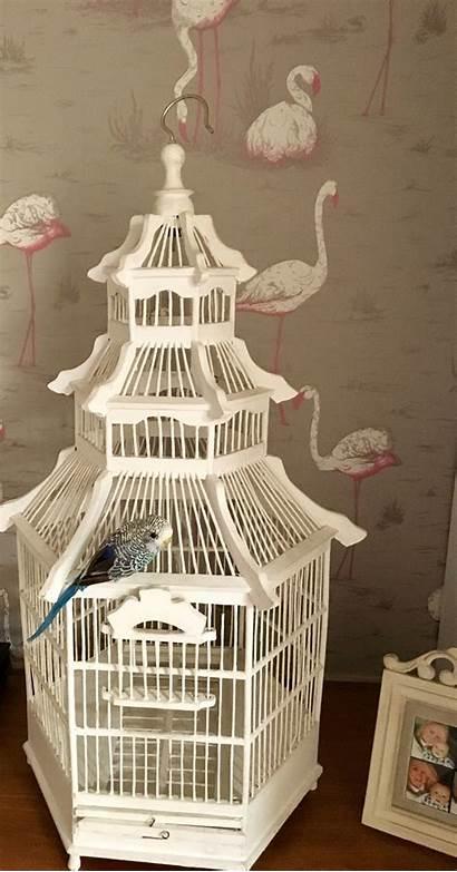 Birdcage Bird Graham Cage Flamingo Living Artificial