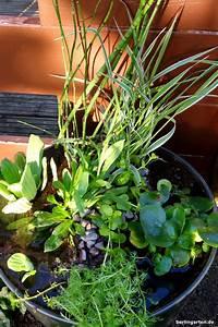 Wann Balkon Bepflanzen : mini teich bepflanzen attraktiv f r balkon terrasse kleine g rten ~ Frokenaadalensverden.com Haus und Dekorationen