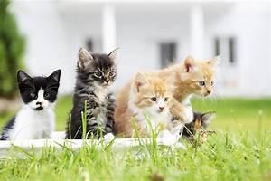 Was Brauchen Katzen : fellfarbe bei katzen das sagt die farbe ihrer katze ber ~ Lizthompson.info Haus und Dekorationen