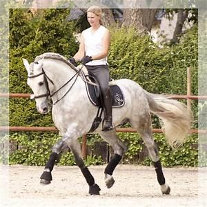 Femme De L Est A Vendre : cheval pure race espagnole yeguada alegria spanish est un levage de chevaux de pure race ~ Medecine-chirurgie-esthetiques.com Avis de Voitures