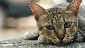 Katzen Fernhalten Von Möbeln : epilepsie bei katzen was haustierbesitzer tun k nnen ~ Michelbontemps.com Haus und Dekorationen