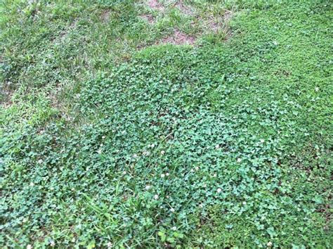 fall gardening how do i kill these weeds in my lawn