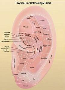 Acupressure Chart Ear Reflexology Charts Tips For Recognizing A Good