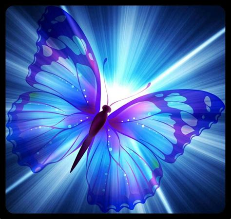 butfli pichis butterfly wallpaper butterfly pictures