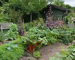 Mischkultur Im Garten : beipflanzung kr uter und gem se wirkungsweise mischkultur ~ Orissabook.com Haus und Dekorationen