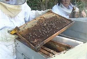 Comment Faire Une Ruche : une ruche bourdonneuse ~ Melissatoandfro.com Idées de Décoration