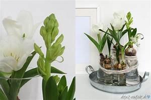 Tulpen Im Glas Ohne Erde : fr hbl herzwiebeln in der vase diy mit blumen detail ~ Frokenaadalensverden.com Haus und Dekorationen