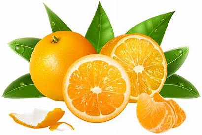 Oranges Clipart Fruit Orange Transparent Clip Yopriceville