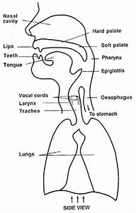 Estill Vocal Method